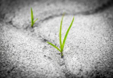 La consecución de los Objetivos de Desarrollo Sostenible