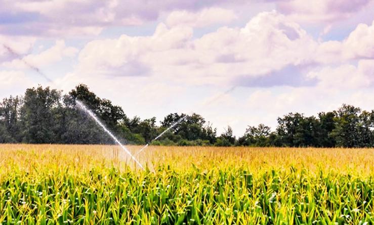 El Parlamento Europeo fijó este viernes su posición sobre la reforma de la PAC (Política Agrícola Común)