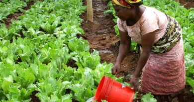Hacen homenaje a la mujer agrícola en Roma